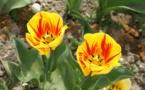 Journée de détente et de découverte au parc floral de Keukenhof en Hollande